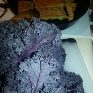 Just me and my purple kale. Everyday.