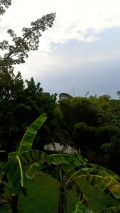 our jungle view