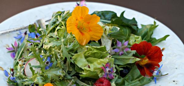 borage salad