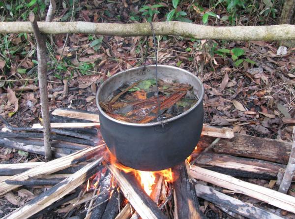 Ayahuasca tea being brewed